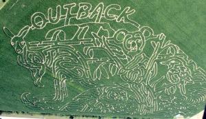 Outback-Corn-Maze-1